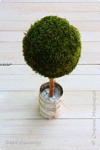Пришла весна,хочется ей немного помочь,сделать зеленый дом для птичьего гнездышка.   фото 11