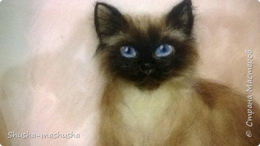 Шерстяная живопись. Кошка Бася. Поэтапность работы фото 14