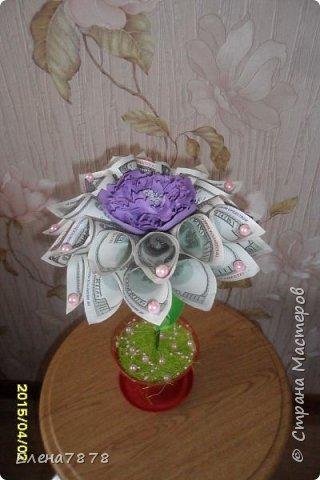 денежные цветок фото 1