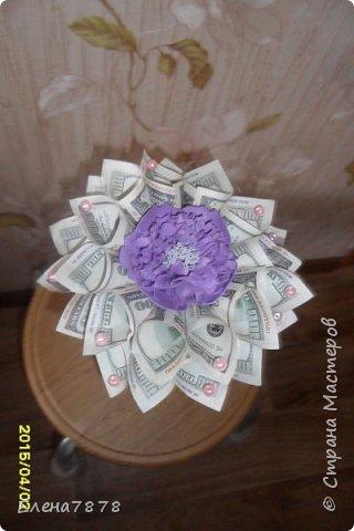 денежные цветок фото 3