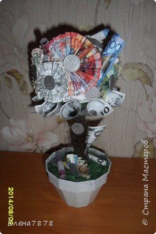 денежные деревья фото 10