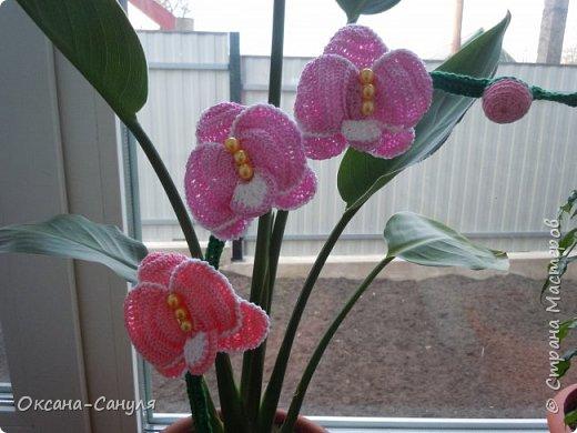 Вязание крючком Орхидеи