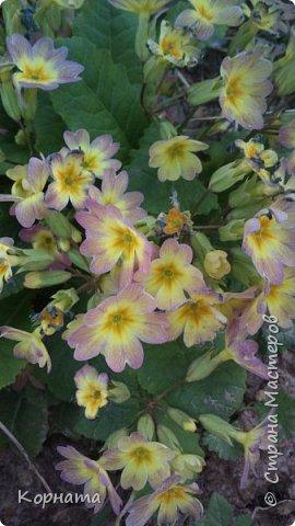 """Доброго времени суток, дорогие мастера ! Сегодня я в хорошем весеннем настроении и делиться буду цветочками, мною нежно любимыми! Брошь-заколка """"АСТРА"""" фото 18"""