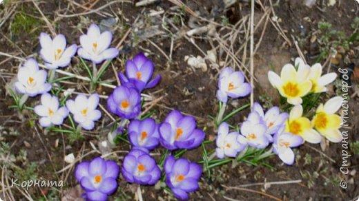 """Доброго времени суток, дорогие мастера ! Сегодня я в хорошем весеннем настроении и делиться буду цветочками, мною нежно любимыми! Брошь-заколка """"АСТРА"""" фото 11"""