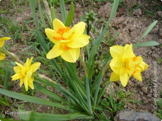 """Доброго времени суток, дорогие мастера ! Сегодня я в хорошем весеннем настроении и делиться буду цветочками, мною нежно любимыми! Брошь-заколка """"АСТРА"""" фото 13"""