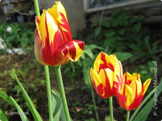 """Доброго времени суток, дорогие мастера ! Сегодня я в хорошем весеннем настроении и делиться буду цветочками, мною нежно любимыми! Брошь-заколка """"АСТРА"""" фото 17"""