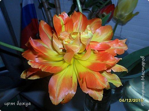 В этом году в нашем городе (г.Волгоград) в центре высадили разные сортовые тюльпаны. Т.к. работаю в центре в обед решила сделать маленькую экскурсию и сфотографировать красоту цветов. Причем народу каждый день фоткалось много. И ветераны и с детьми, и молодежь. фото 26