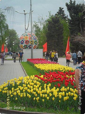 В этом году в нашем городе (г.Волгоград) в центре высадили разные сортовые тюльпаны. Т.к. работаю в центре в обед решила сделать маленькую экскурсию и сфотографировать красоту цветов. Причем народу каждый день фоткалось много. И ветераны и с детьми, и молодежь. фото 9