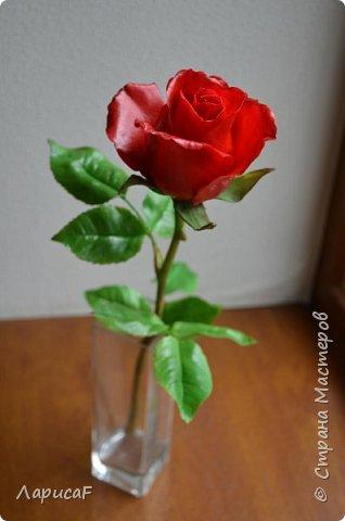 Розы. Именно с роз я начала! Покажу вам свои первые работы. Розы бывают разные…  Все эти работы подарены ))) фото 4