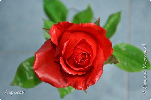 Розы. Именно с роз я начала! Покажу вам свои первые работы. Розы бывают разные…  Все эти работы подарены ))) фото 5