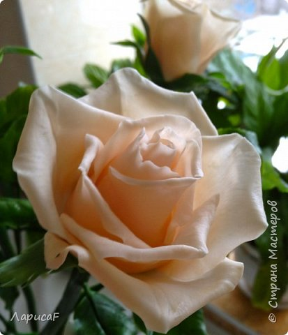 Розы. Именно с роз я начала! Покажу вам свои первые работы. Розы бывают разные…  Все эти работы подарены ))) фото 11