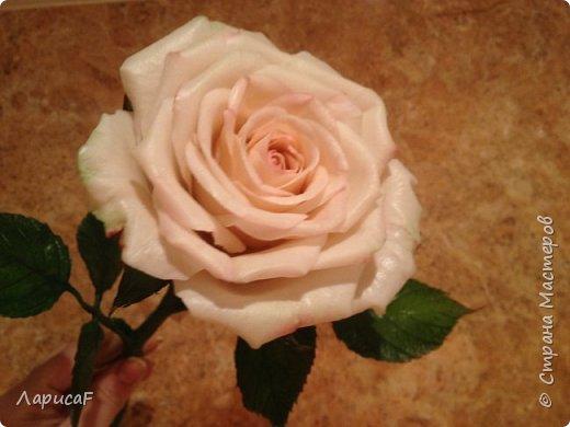 Розы. Именно с роз я начала! Покажу вам свои первые работы. Розы бывают разные…  Все эти работы подарены ))) фото 9
