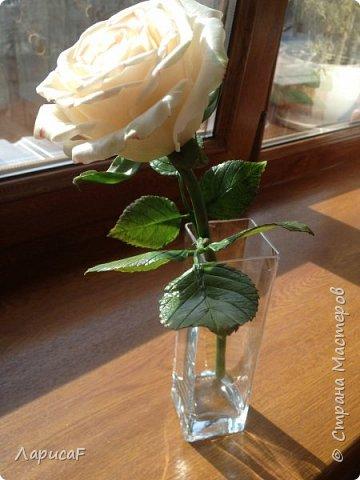 Розы. Именно с роз я начала! Покажу вам свои первые работы. Розы бывают разные…  Все эти работы подарены ))) фото 8