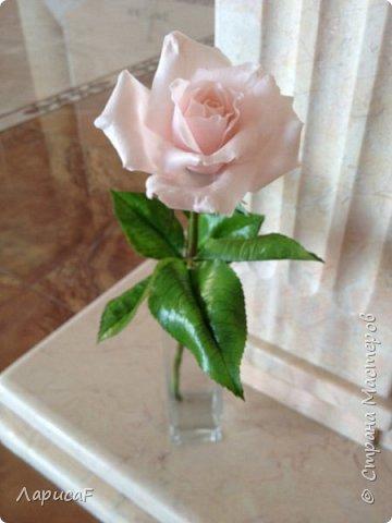 Розы. Именно с роз я начала! Покажу вам свои первые работы. Розы бывают разные…  Все эти работы подарены ))) фото 17