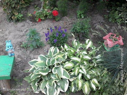Приветствую вас дорогие жители Страны Мастеров!!!Я очень люблю цветы и выращиваю их .Хочу поделиться своими цветочками с вами. фото 4