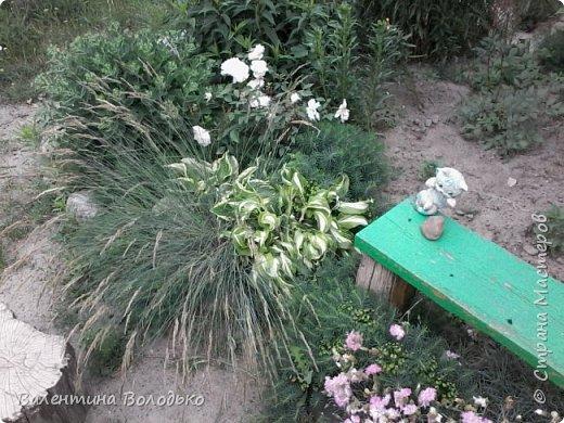 Приветствую вас дорогие жители Страны Мастеров!!!Я очень люблю цветы и выращиваю их .Хочу поделиться своими цветочками с вами. фото 5