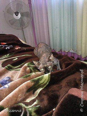 """Всю жизнь считала себя """" собачницей """"...но...когда появилось это чудо...поняла...что пропала...)))))))))) фото 12"""