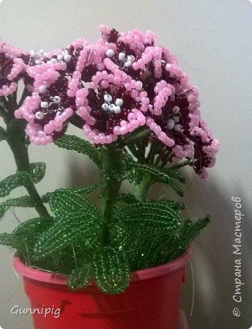 Здравствуйте. Сегодня хочу вам представить мастер-класс по плетению флоксов или турецкой гвоздики из бисера (ибо цветки у этих растений очень похожи, можно по данному МК плести как те, так и другие цветочки). Может кто-нибудь тоже захочет создать для себя или в подарок эти замечательные цветы! Флоксы - богатая тема для фантазии, ибо расцветок, форм и видов этих растений очень много! Я решила сплести двухцветные флоксы. Приступим) фото 24