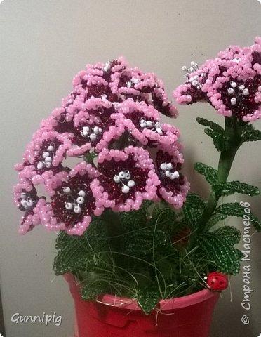 Здравствуйте. Сегодня хочу вам представить мастер-класс по плетению флоксов или турецкой гвоздики из бисера (ибо цветки у этих растений очень похожи, можно по данному МК плести как те, так и другие цветочки). Может кто-нибудь тоже захочет создать для себя или в подарок эти замечательные цветы! Флоксы - богатая тема для фантазии, ибо расцветок, форм и видов этих растений очень много! Я решила сплести двухцветные флоксы. Приступим) фото 25