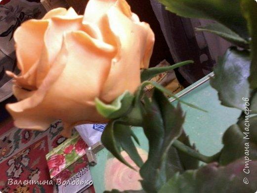 Здравствуйте жители Страны Мастеров.У меня новая попытка сделать розы с холодного фарфора.Выношу на ваше обозрение. фото 4