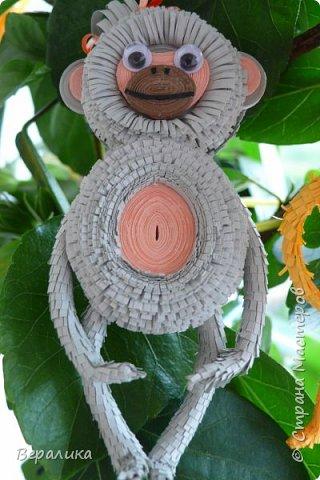 Хочу показать вам как я делала серую обезьянку. Ее размер: 10см, а с хвостиком-бантиком -11см. Нам понадобятся самые простые и доступные материалы: -Обычная офисная бумага (розовая, серая и коричневая) из которой можно нарезать полоски разной ширины и стандартной длины 29,5см; -гофробумага любого цвета ( желательно в тон обезьянки: у меня не было серой, взяла коричневую); -флористическая проволока ( у меня №9); -ножнички для нарезки бахромы; -клей ПВА и Момент прозрачный ( если кто любит собирать на клеевой пистолет, то приготовьте его вместо клея Момент); фото 25