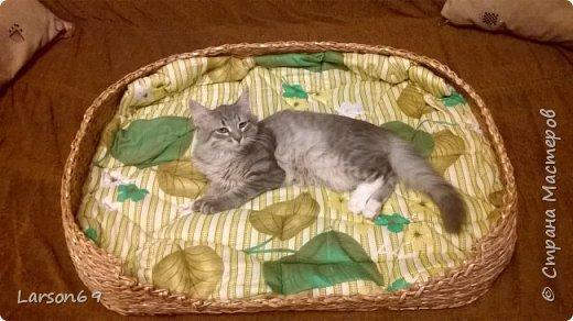 Подруга попросила сделать лежак для своей собачки. Порода - бигль. Плела из газетных трубочек( белых краешков). Красила водной морилкой- дуб( разведенной). Затем лак акриловый. Матрасик- из одеяла, внутри поролон-10мм, немного простегала. фото 6