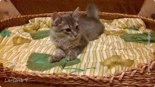 Подруга попросила сделать лежак для своей собачки. Порода - бигль. Плела из газетных трубочек( белых краешков). Красила водной морилкой- дуб( разведенной). Затем лак акриловый. Матрасик- из одеяла, внутри поролон-10мм, немного простегала. фото 2