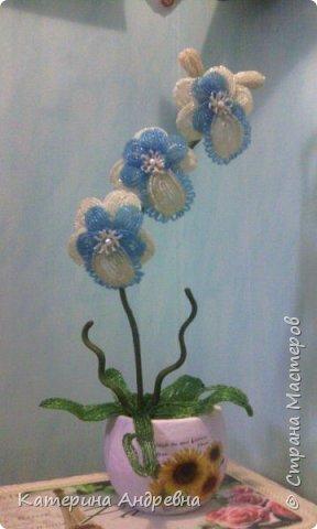 Моя первая Орхидея!!!