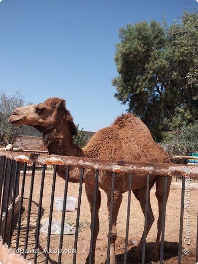 Привет! Сегодня я вам покажу своих животных.  Как вы знаете Это наш любимчик))) Гизмо говорит вам привет! фото 14