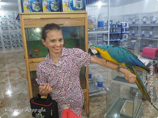 Привет! Сегодня я вам покажу своих животных.  Как вы знаете Это наш любимчик))) Гизмо говорит вам привет! фото 12