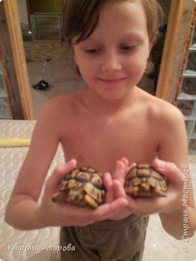 Привет! Сегодня я вам покажу своих животных.  Как вы знаете Это наш любимчик))) Гизмо говорит вам привет! фото 11