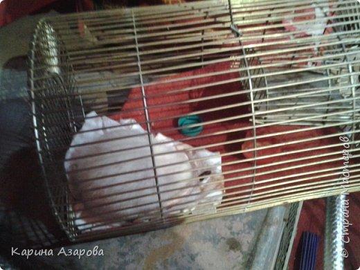 Привет! Сегодня я вам покажу своих животных.  Как вы знаете Это наш любимчик))) Гизмо говорит вам привет! фото 7