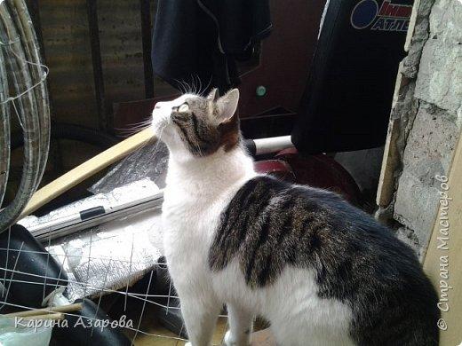Привет! Сегодня я вам покажу своих животных.  Как вы знаете Это наш любимчик))) Гизмо говорит вам привет! фото 2