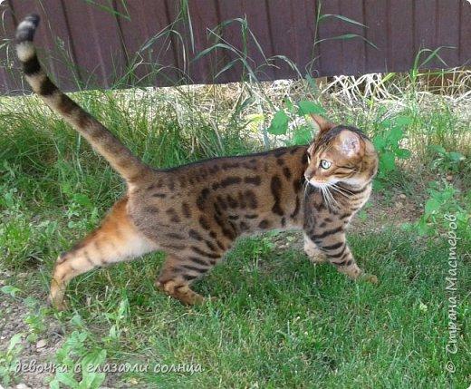 Это кот по кличке Босс. фото 2