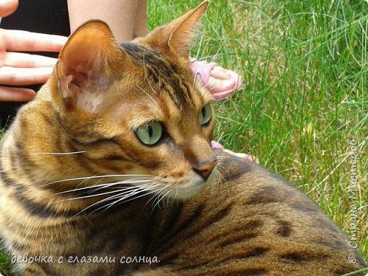 Это кот по кличке Босс. фото 5