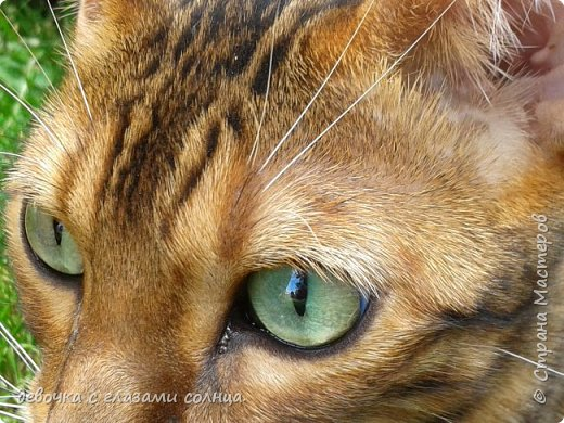 Это кот по кличке Босс. фото 1