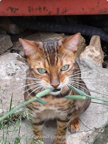 Это кот по кличке Босс. фото 8