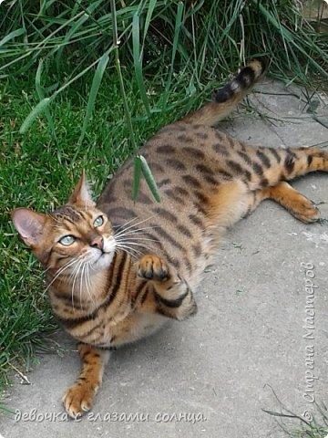 Это кот по кличке Босс. фото 6