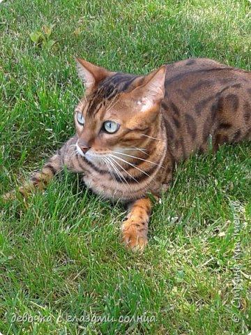 Это кот по кличке Босс. фото 3