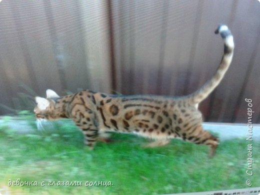 Это кот по кличке Босс. фото 4