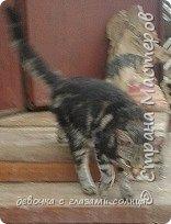 Муся и Маруся кошки моей тети. Их судьба сложилась по разному. Мусю(та кошка которая темная) забрал сын моей тети с женой, у них дача и поэтому они посчитали что там Мусе будет лучше. А Маруся (светлая кошка) осталась жить в квартире у моей тети. фото 2