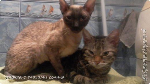 Муся и Маруся кошки моей тети. Их судьба сложилась по разному. Мусю(та кошка которая темная) забрал сын моей тети с женой, у них дача и поэтому они посчитали что там Мусе будет лучше. А Маруся (светлая кошка) осталась жить в квартире у моей тети. фото 1