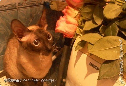 Муся и Маруся кошки моей тети. Их судьба сложилась по разному. Мусю(та кошка которая темная) забрал сын моей тети с женой, у них дача и поэтому они посчитали что там Мусе будет лучше. А Маруся (светлая кошка) осталась жить в квартире у моей тети. фото 4