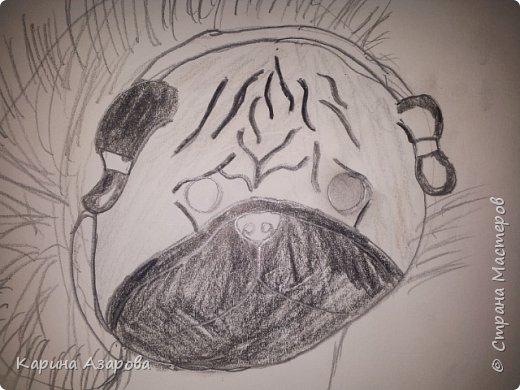 Здравствуйте! Сегодня я Вам покажу как нарисовать мопса. Начнем! фото 8