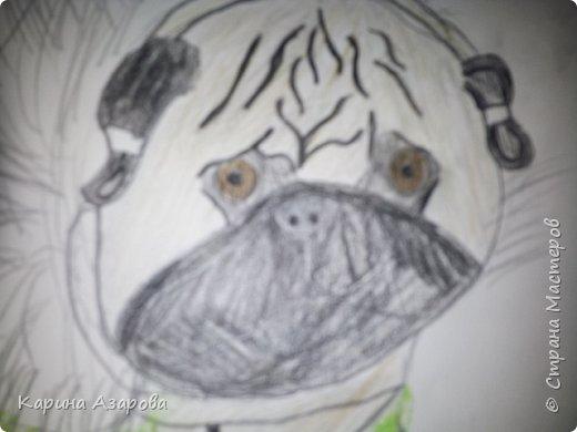 Здравствуйте! Сегодня я Вам покажу как нарисовать мопса. Начнем! фото 11