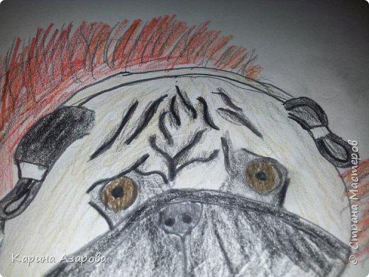 Здравствуйте! Сегодня я Вам покажу как нарисовать мопса. Начнем! фото 13