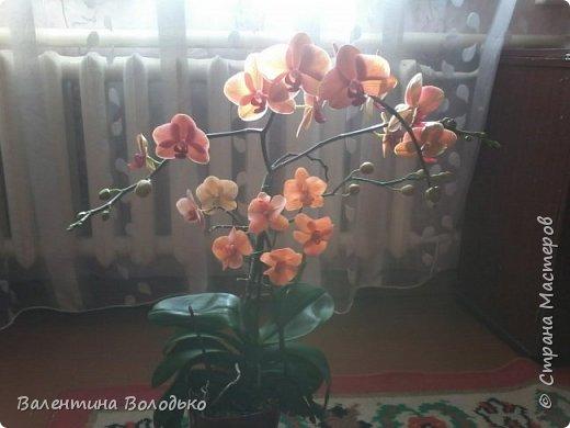 Здравствуйте дороги мастера и мастерицы!!!Смотрите мои новые работы.Первый раз лепила орхидейку.Листочки не получились,ну а веточку прошу оценить. фото 7