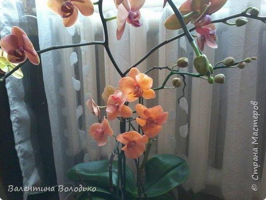 Здравствуйте дороги мастера и мастерицы!!!Смотрите мои новые работы.Первый раз лепила орхидейку.Листочки не получились,ну а веточку прошу оценить. фото 8