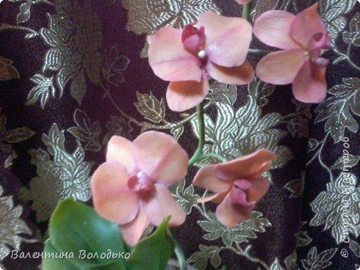 Здравствуйте дороги мастера и мастерицы!!!Смотрите мои новые работы.Первый раз лепила орхидейку.Листочки не получились,ну а веточку прошу оценить. фото 3
