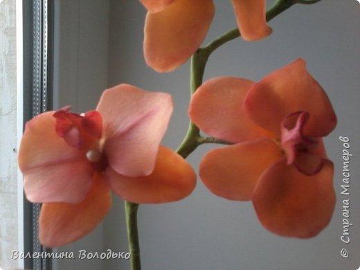 Здравствуйте дороги мастера и мастерицы!!!Смотрите мои новые работы.Первый раз лепила орхидейку.Листочки не получились,ну а веточку прошу оценить. фото 4